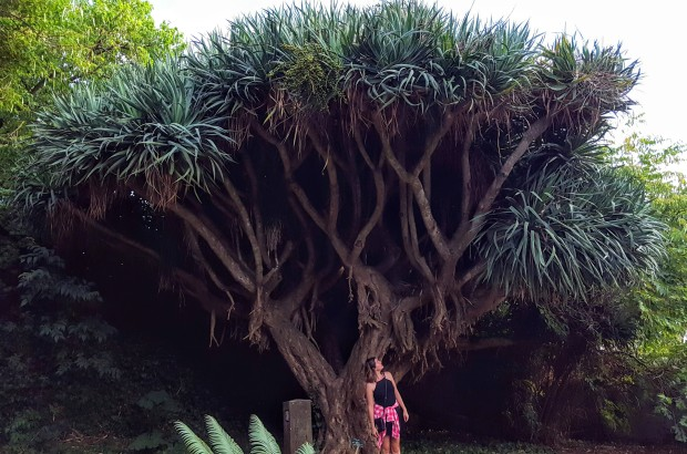 Tropical Botanical Garden in Lisbon