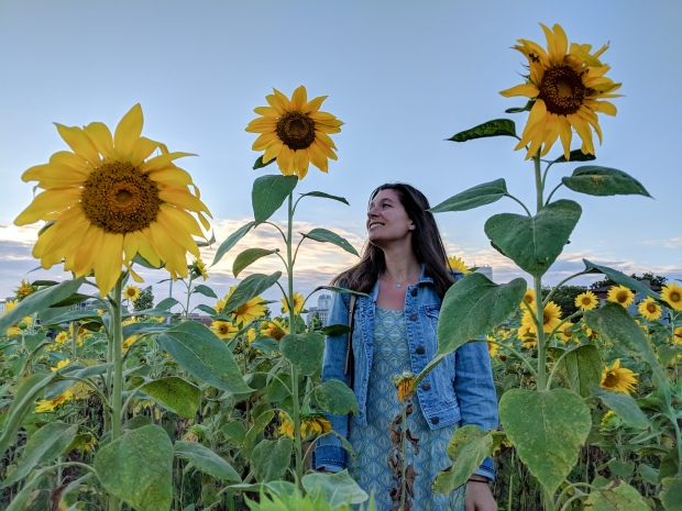Sunflower field in Providence